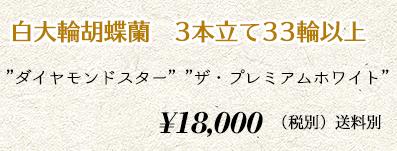 胡蝶蘭ギフト 3本×33輪 20,000円