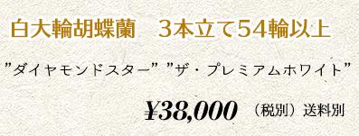 胡蝶蘭 3本54輪 50,000円