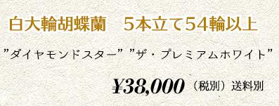胡蝶蘭ギフト 5本55輪 45,000円