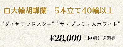 胡蝶蘭ギフト 5本40輪 30,000円