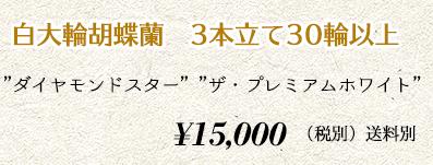 胡蝶蘭 3本30輪 16,000円