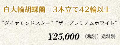 胡蝶蘭 3本42輪 32,000円