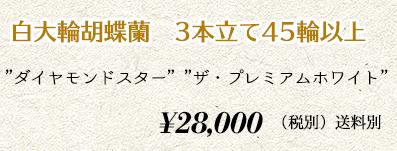 胡蝶蘭 3本45輪 30,000円