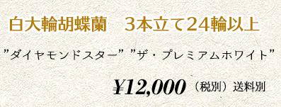 胡蝶蘭 3本24輪 14,000円