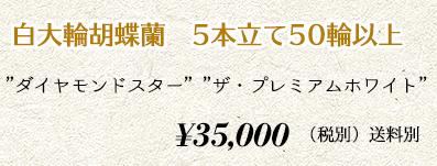 胡蝶蘭ギフト 5本50輪 38,000円