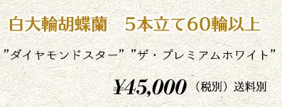 胡蝶蘭 5本60輪 50,000円
