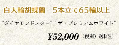 胡蝶蘭ギフト 5本65輪 60,000円